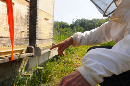 Beekeeper in protective clothing at beehive