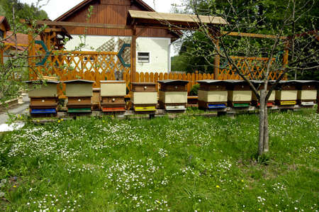 Beehives in a garden, outdoors 스톡 콘텐츠