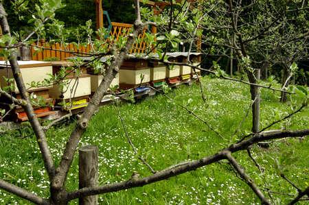 Beehives in a garden, outdoors Reklamní fotografie - 140625102