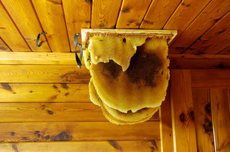 Wild bees and honeycomb in the attic Reklamní fotografie - 140625034