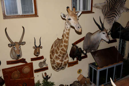 big game hunting, hunting trophies