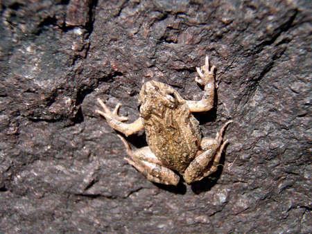 toad sitting on a stone Stock Photo