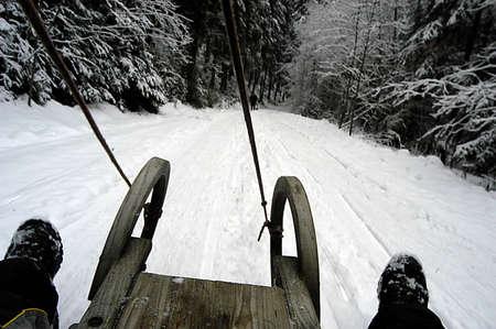 tobogganing or sledging in winter