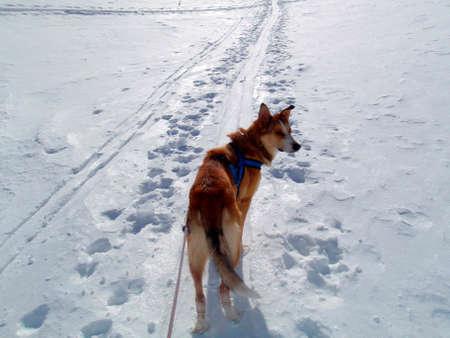 dog in a winter landscape