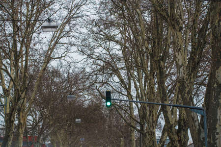 green traffic light and trees