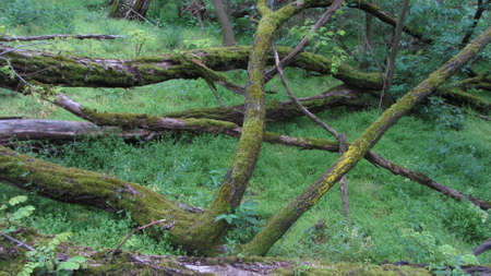 moss covered deadwood in the forest
