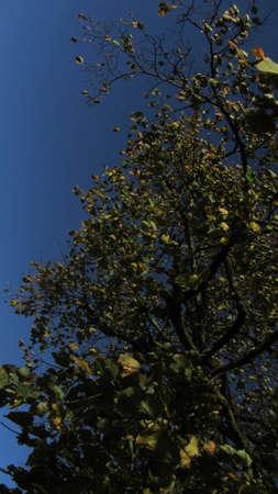 Tree crown and tree leaves Standard-Bild