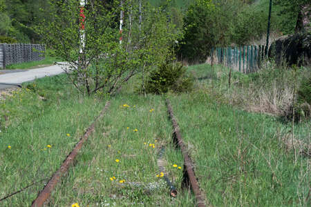 overgrown and abandoned railway line