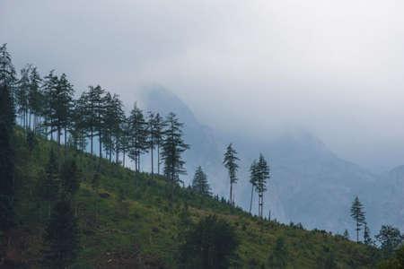 Reforestation of a forest slope 写真素材