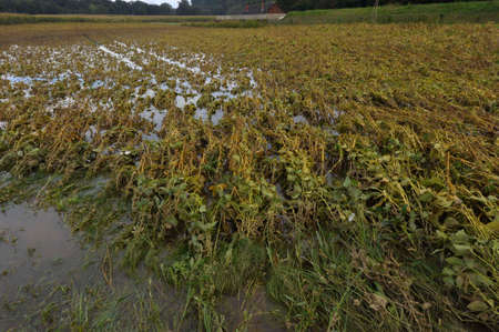 a flooded field, water damage in agriculture Imagens