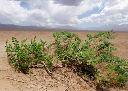 heat and drought in a desert landscape