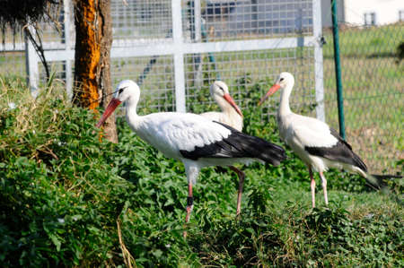 Stork station for injured animals in Tillmitsch, Austria