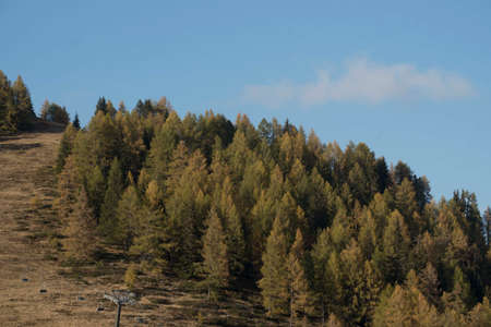 protection forest as avalanche protection in the mountains