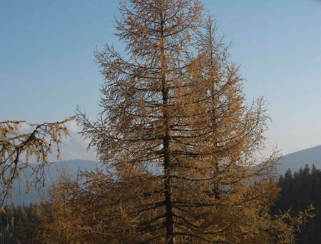 protection forest as an avalanche protection in the alpine mountains