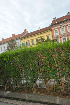 cutted green hedge with houses in the city, cloudy sky Reklamní fotografie