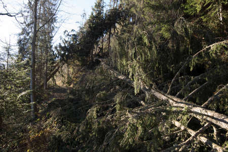 storm damage in the forest, with fallen trees and blue sky Reklamní fotografie