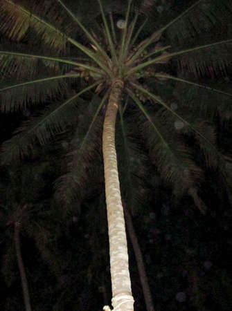 a tall palm tree at night with dark and black background
