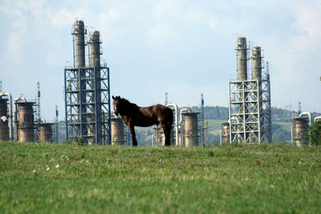 petroleum refinery in romania, with horse on green meadow in front of it, energy sector Banque d'images