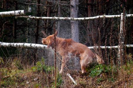 dog shaking itself after swimming in the river, splashing water Stock fotó