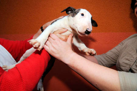 two people holding a puppy dog, with orange wall background