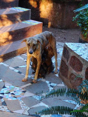 mother dog feeding its puppies, stone floor in the garden