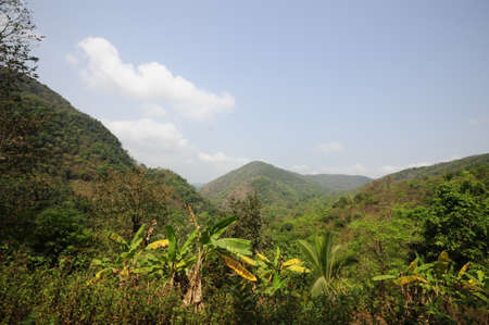 Jungle in South India, green plants and trees, species diversity and biodiversity