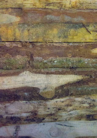 wood grain on a board, natural textures and patterns on wood
