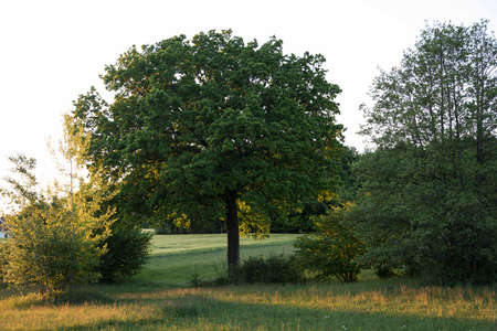 Oak tree in the forest, trees and soil in a deciduous forest