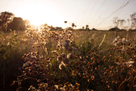 light as a life force for plants, photosynthesis in nature