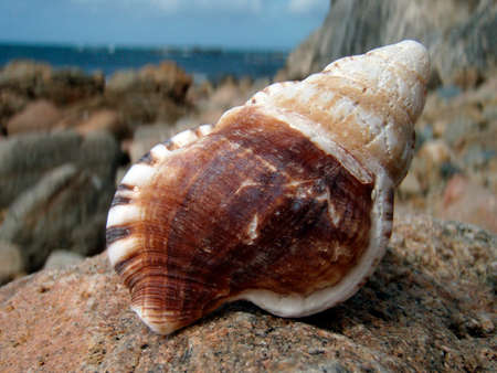 empty sea shells, seashells or shells from an animal at the beach 免版税图像