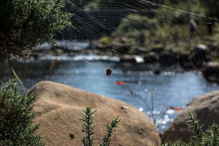 a spider web or cobweb, architectural structure in the nature 写真素材