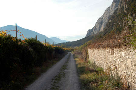winegrowing and viticulture in beautiful alpine landscape in south tyrol Reklamní fotografie