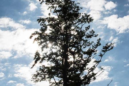 light as life force in nature, sunshine for energy and vitality Reklamní fotografie