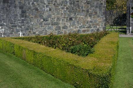 green shrubs building a hedge or hedgerow as a natural garden fence Stockfoto