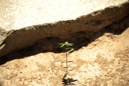 plant growth as a sign of vitality, life and energy