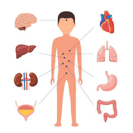 Diagramme médical des organes humains Vecteurs