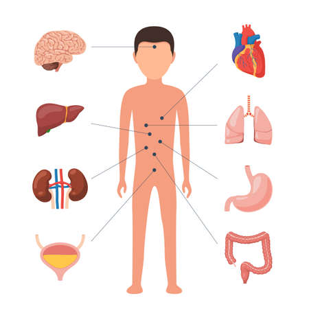 Medical diagram human organs Illustration