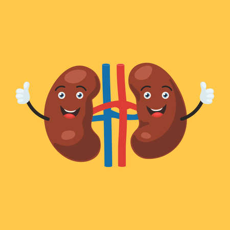 Funny happy kidney character show hand thumb up. Human internal organ sign. Vector illustration in cartoon style