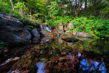 showa: Autumn leaves in pond with waterfall Stock Photo