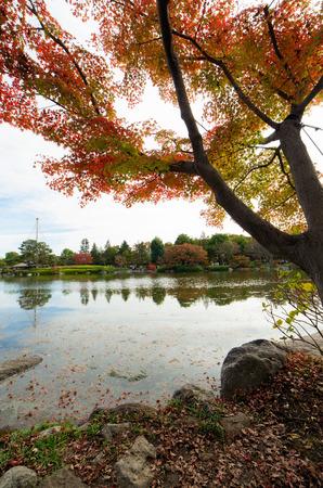 showa: Autumn garden in Japan