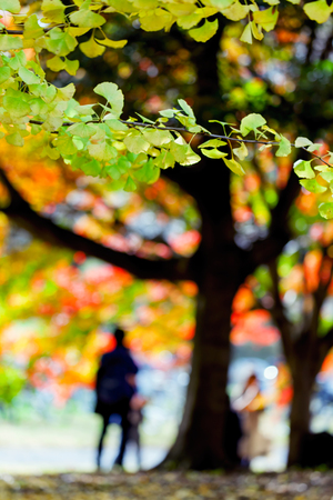 showa: Colorful Autumn leaves