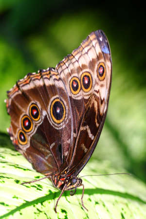 pflanze: butterfly