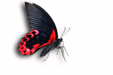 butterfly Stock Photo - 12611251