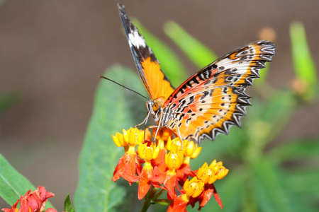 Butterfly Stock Photo - 12902445