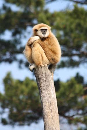 monkey Stock Photo - 12902558