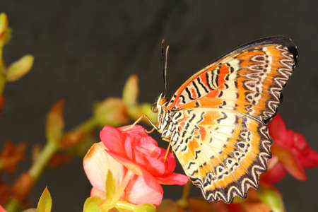 Butterfly Stock Photo - 13185944