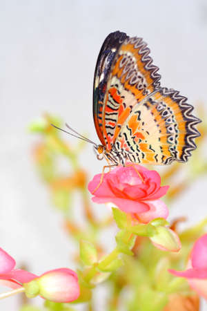 Butterfly Stock Photo - 13185929