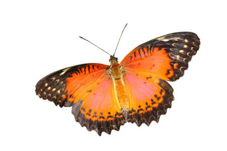 Butterfly Stock Photo - 13185927