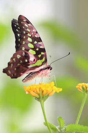 butterfly Stock Photo - 14228793