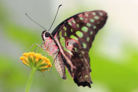 butterfly Stock Photo - 14228792